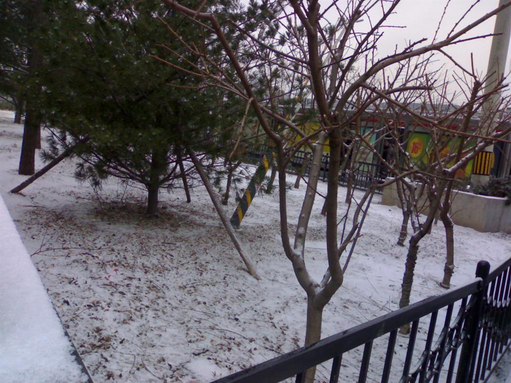 草坪枝桠,都披上了薄薄的雪被